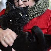 Adopt A Pet :: Jake - Brooklyn, NY