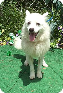 Spitz (Unknown Type, Small) Dog for adoption in Marietta, Georgia - LOUIE
