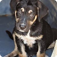 Adopt A Pet :: *Eric Foreman - PENDING - Westport, CT