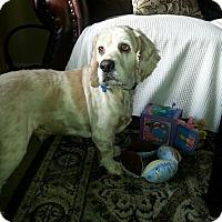 Adopt A Pet :: TOBY - Tacoma, WA