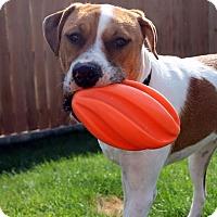 Adopt A Pet :: Apollo - West Richland, WA