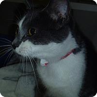 Adopt A Pet :: Sloan - Hamburg, NY
