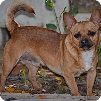 Adopt A Pet :: Bolt - Simi Valley, CA