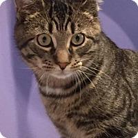 Adopt A Pet :: Griffin - Trevose, PA