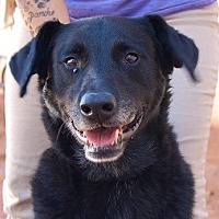 Adopt A Pet :: Carter - Las Vegas, NV