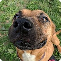 Adopt A Pet :: Elsa - Lisbon, OH