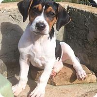 Adopt A Pet :: Cowboy - North Brunswick, NJ