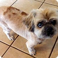 Lhasa Apso Mix Dog for adoption in Overland Park, Kansas - Cash
