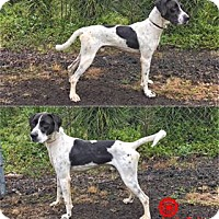 Adopt A Pet :: Prince - Kailua-Kona, HI