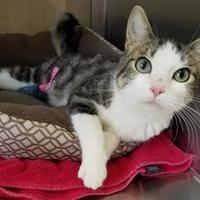 Adopt A Pet :: Chance - Marshfield, WI