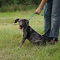 Adopt A Pet :: Fritz - Oviedo, FL