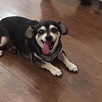 Adopt A Pet :: Lucky - courtesy post - Encino, CA