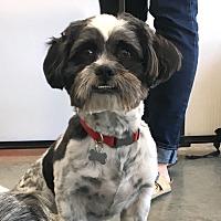 Adopt A Pet :: Meeko - Pleasanton, CA