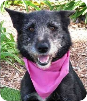 Terrier (Unknown Type, Medium) Mix Dog for adoption in San Diego, California - Melody
