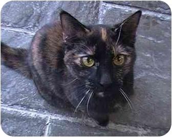 Domestic Shorthair Cat for adoption in Columbiaville, Michigan - Nala