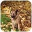 Photo 4 - Belgian Malinois/Australian Shepherd Mix Dog for adoption in levittown, New York - Dixie