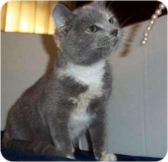 Calico Cat for adoption in Metamora, Indiana - Pearl