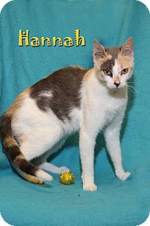 Calico Cat for adoption in Albert Lea, Minnesota - Hannah
