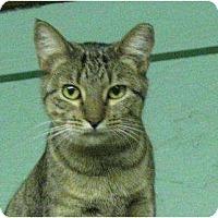 Adopt A Pet :: Ella - Metairie, LA