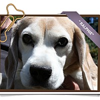 Adopt A Pet :: Ralphie - Portland, OR