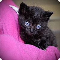 Adopt A Pet :: Bud - Xenia, OH