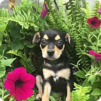 Adopt A Pet :: Betty - Russellville, KY