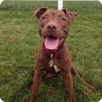 Adopt A Pet :: Ruby - Park Ridge, NJ