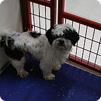 Adopt A Pet :: Tucker - Rockwall, TX