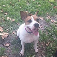 Adopt A Pet :: Dahlia - Tampa, FL
