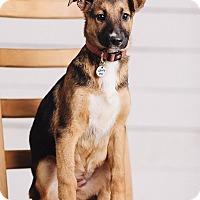 Adopt A Pet :: Aspen - Portland, OR