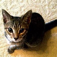 Adopt A Pet :: Sidekick (KJ) 11.9.12 - Orlando, FL