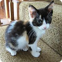 Adopt A Pet :: Hedy - Orange, CA