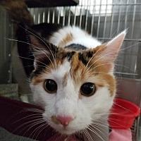 Adopt A Pet :: Smores - Montgomery City, MO
