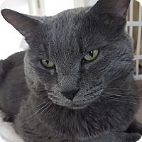 Adopt A Pet :: Lito - Salisbury, MA