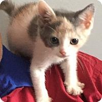 Adopt A Pet :: CHLOE - Cliffside Park, NJ