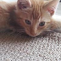 Adopt A Pet :: Devin - Gardena, CA