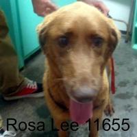 Adopt A Pet :: Rosalee - Manassas, VA