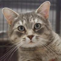 Adopt A Pet :: Dakota - Bathurst, NB