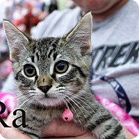 Adopt A Pet :: Ra - Wichita Falls, TX