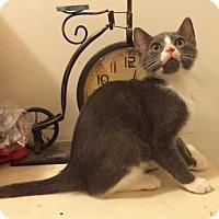 Adopt A Pet :: Tucky - Philadelphia, PA