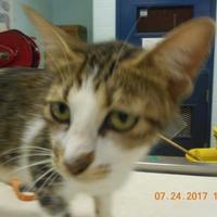 Adopt A Pet :: TCR-11 7\24\17 - San Angelo, TX