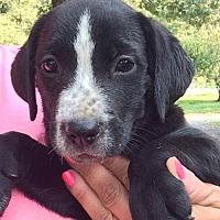Adopt A Pet :: Rumble - Hartford, CT