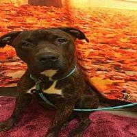 Adopt A Pet :: *DRAKE - Upper Marlboro, MD