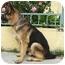 Photo 4 - German Shepherd Dog Dog for adoption in Los Angeles, California - Sebastian von Sonntag