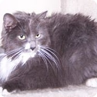 Adopt A Pet :: Miss Willow (MIssy) - Colorado Springs, CO