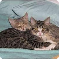 Adopt A Pet :: Tara - Riverside, RI