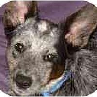 Adopt A Pet :: Wylie - Phoenix, AZ
