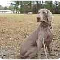 Adopt A Pet :: Holly  **ADOPTED** - Eustis, FL