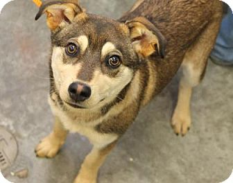 Australian Cattle Dog Mix Dog for adoption in Philadelphia, Pennsylvania - Charlie