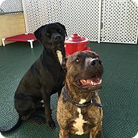 Adopt A Pet :: Jack - Encino, CA